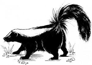 skunk-hi-res-ie