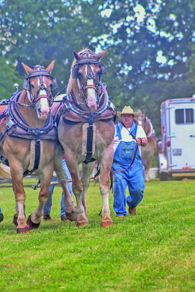 Draft Horse & Pony Pull May 11 – The Taylorsville Times