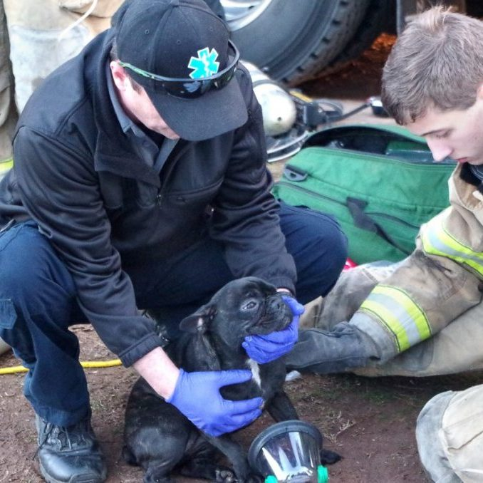 PETS RESCUED FROM FIRE — Firefighters and  paramedics rescued and treated dogs with oxygen, above, at a house fire on Jay Stafford Lane in Taylorsville on January 16.